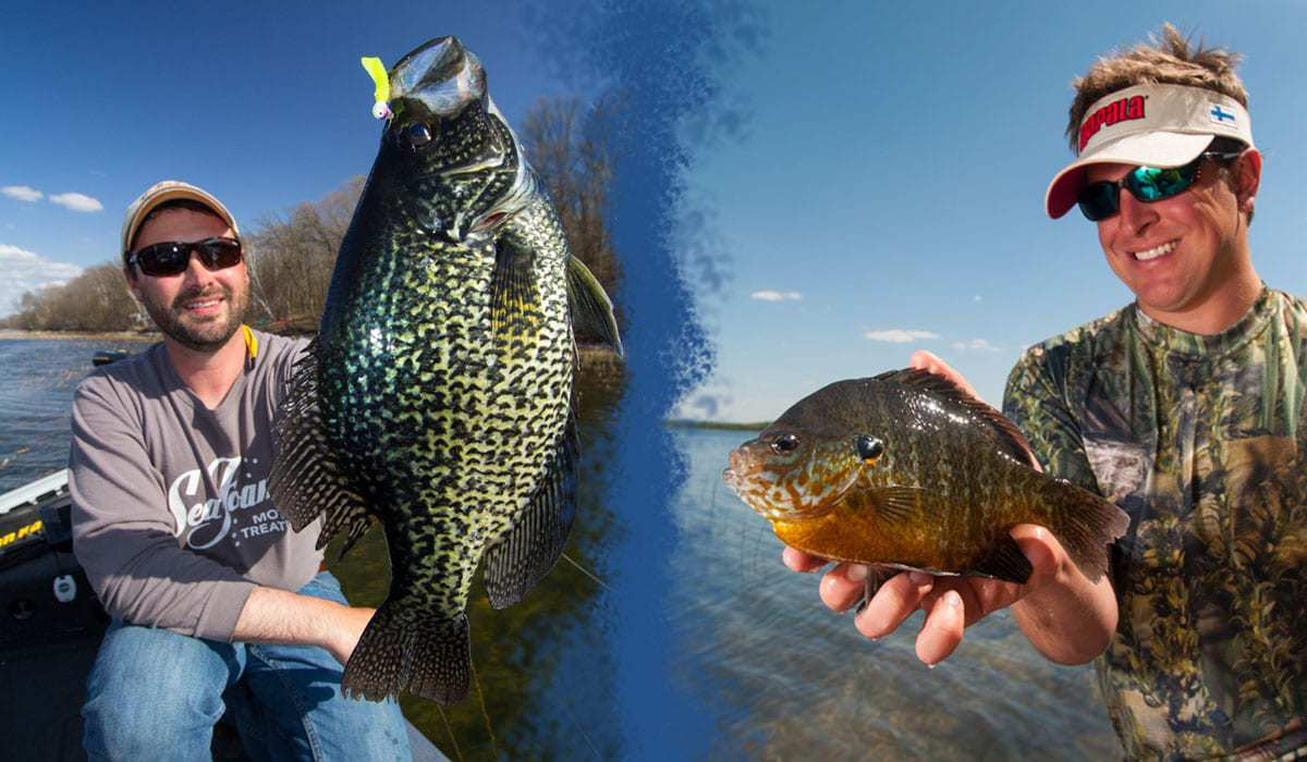 5. Spawning Crappies and Bluegills 6_8_15