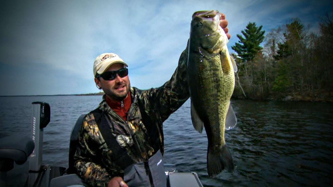 largemouth-bass-on-a-scatter-rap