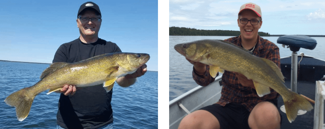 Cross Bay (Cedar Lake) Walleye