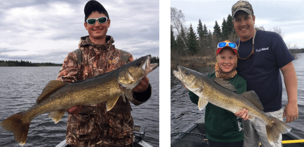 Simonhouse Lake Walleye