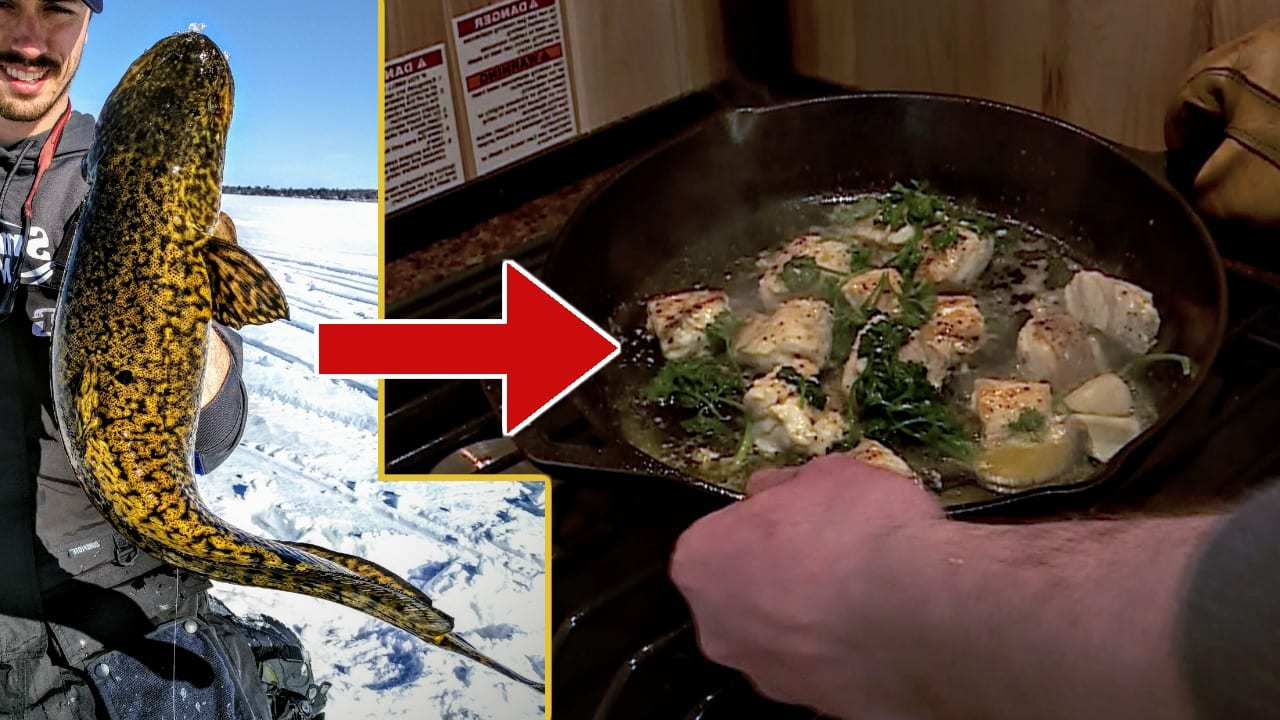Eelpout Recipe
