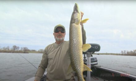 Spring Pike Spinnerbait Success