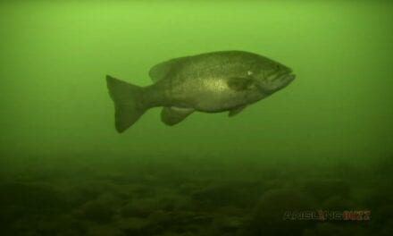 Spring Smallmouth Bass Location and Lure Preference