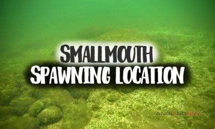 Smallmouth Bass Spawning Location
