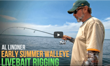 Walleye – Livebait Rigging for Early Summer Success