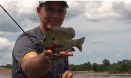 Dog Days River Panfish Tips