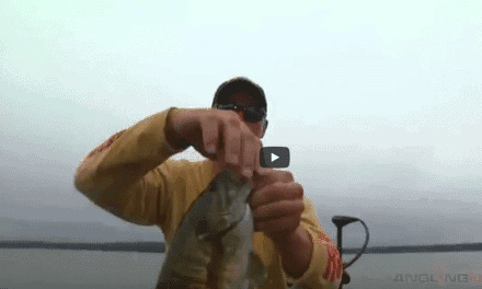 Summer Smallmouths on Lakes with Suspended Baitfish