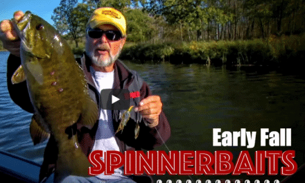 Smallmouth Bass Love Spinnerbaits in Early Fall