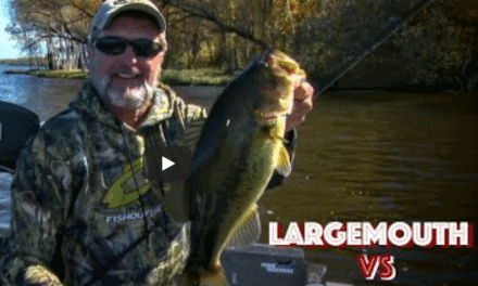 Largemouth vs. Smallmouth Bass Location in Fall