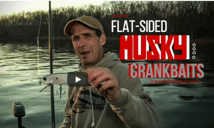 Flat-Sided Crankbaits for Fall Muskies