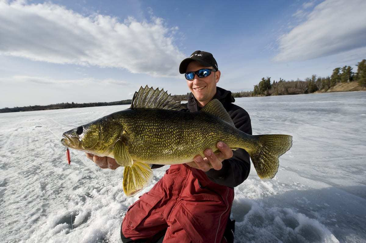 Early Ice Walleyes – Tips and Secrets