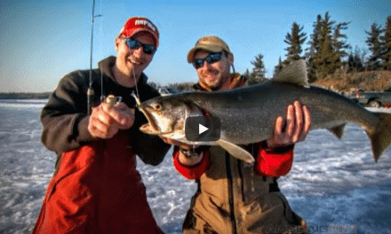 Walleyes and Lake Trout at Late Ice