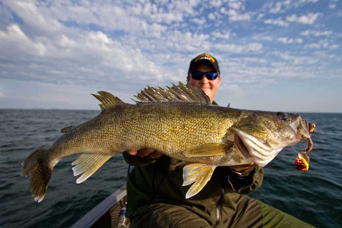 Minnesota Walleye Opener