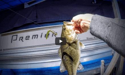 Wacky Worming Dock Bass