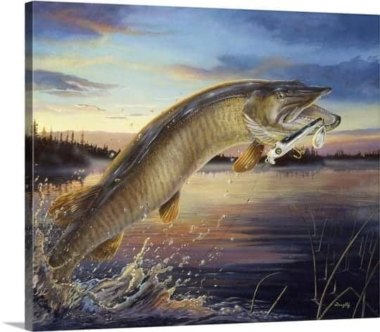 Topwater Muskies – Legacy or Lore?