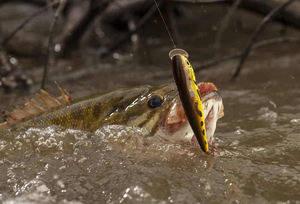 TOPWATER BASS FISHING