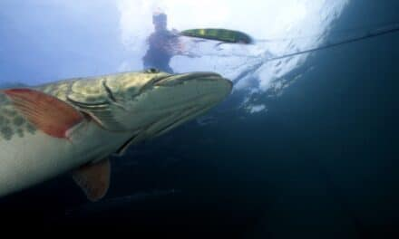 What's Your Favorite Tactic for Summer Muskies?