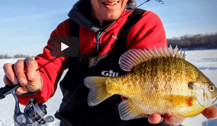 How to Quickly Find and Catch Bluegills Along Bottom Transitions