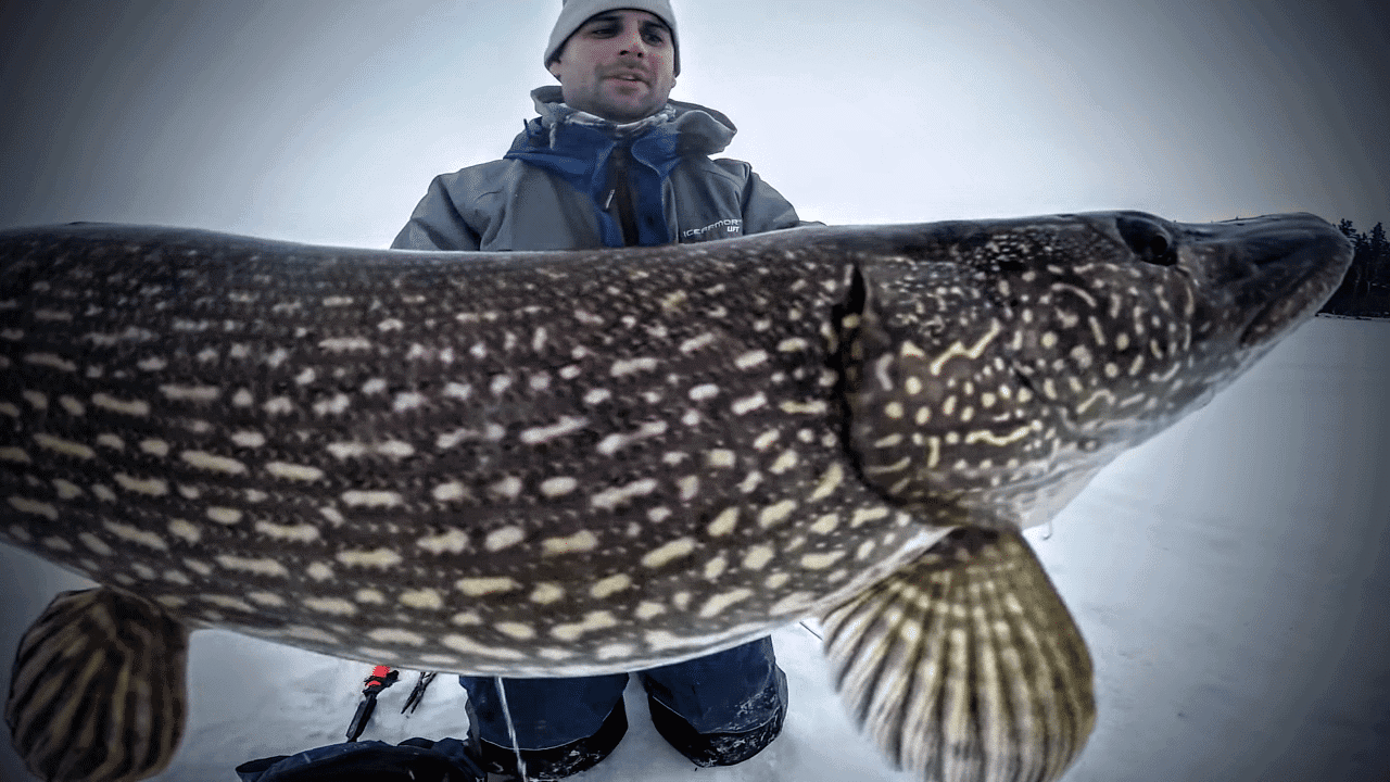 Montage: Giant Manitoba Pike on Tip-Ups