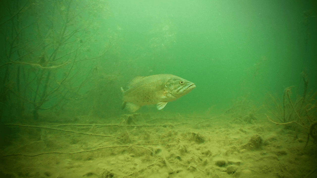 Finding Fish Throughout Their Seasonal Peaks