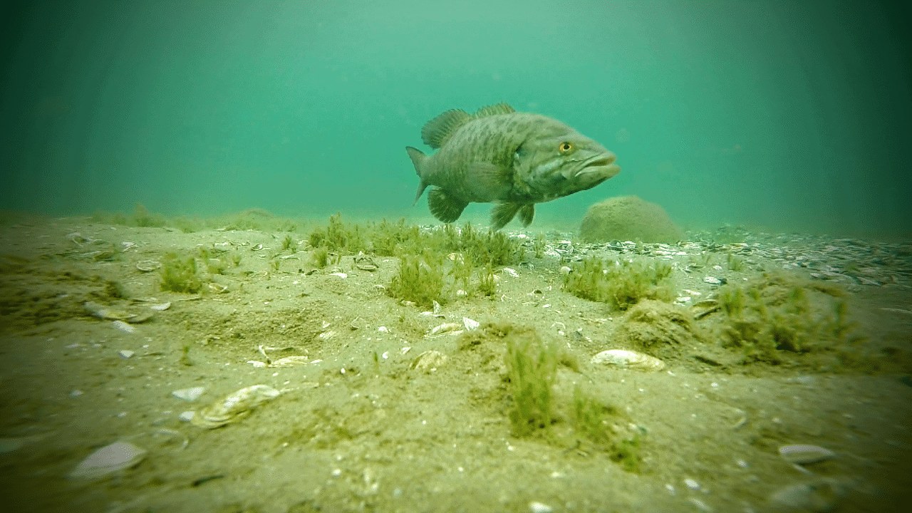 Fish in Michigan