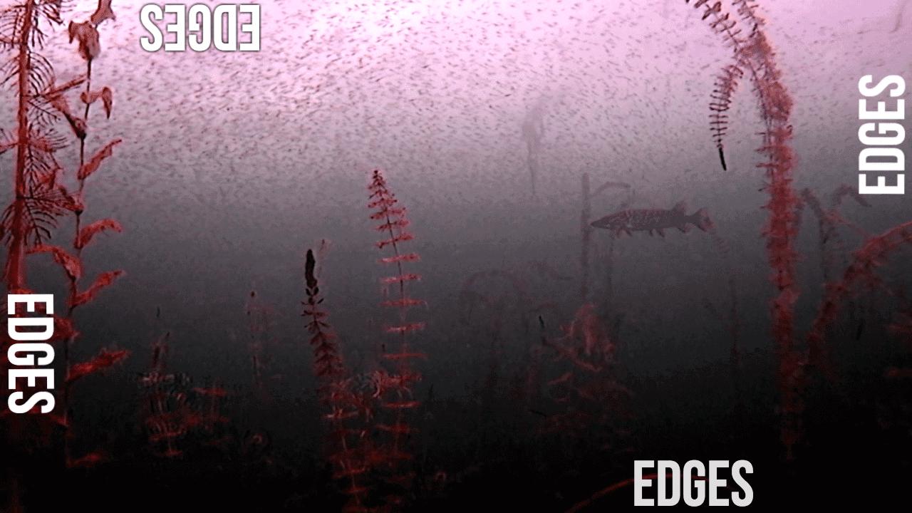 Understanding How FISHING EDGES Impact Fishing