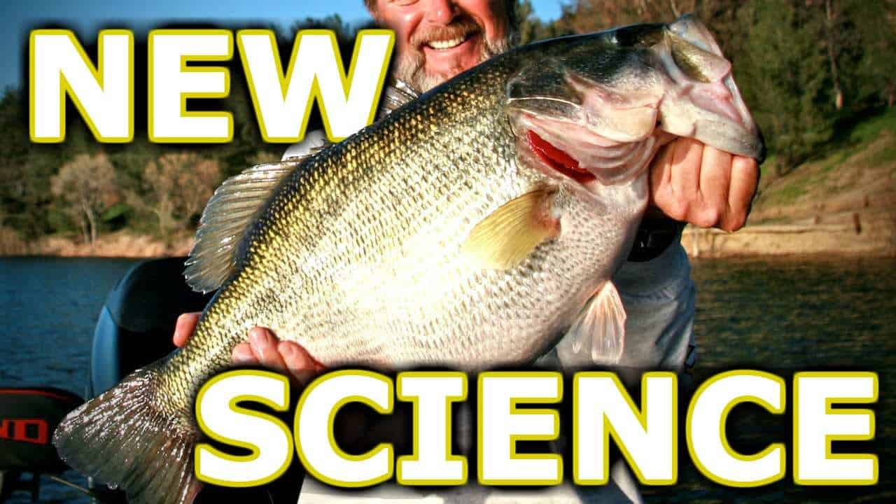 NEVER use Chartreuse for Largemouth