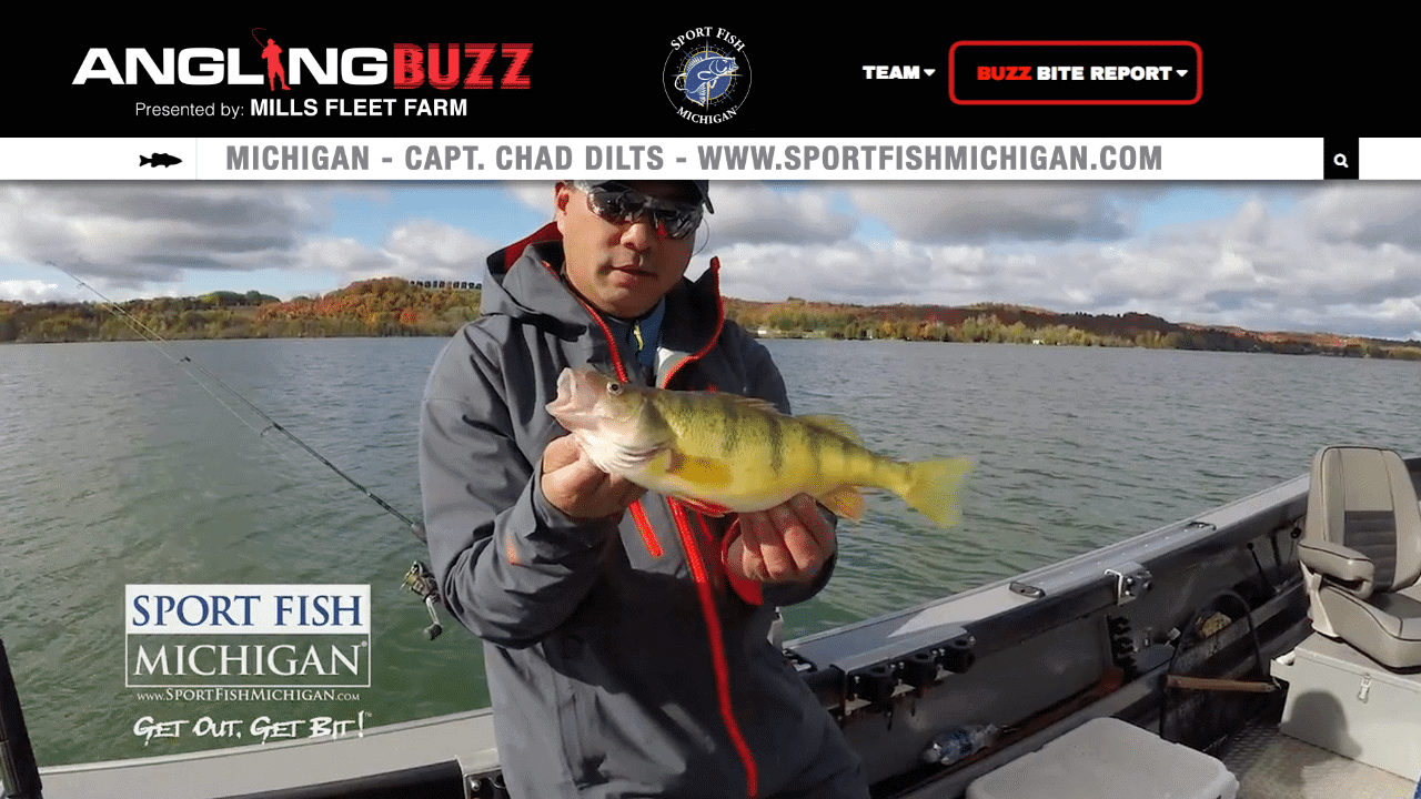 Michigan Perch Fishing Report – Capt. Chad Dilts