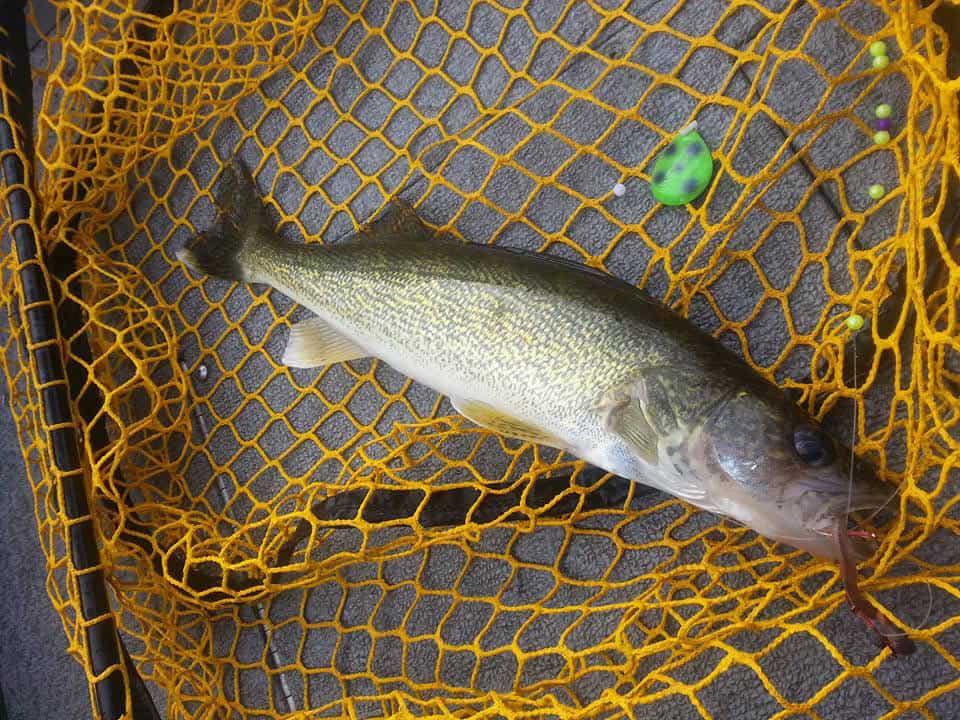 Lake Winnebago & Fox River (WI) Fishing Report – Mark Schram