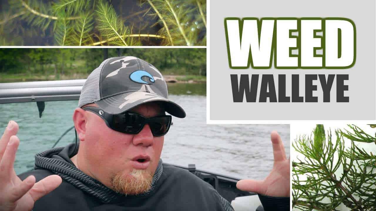 Weed Walleye Fishing (Tips & Tactics)