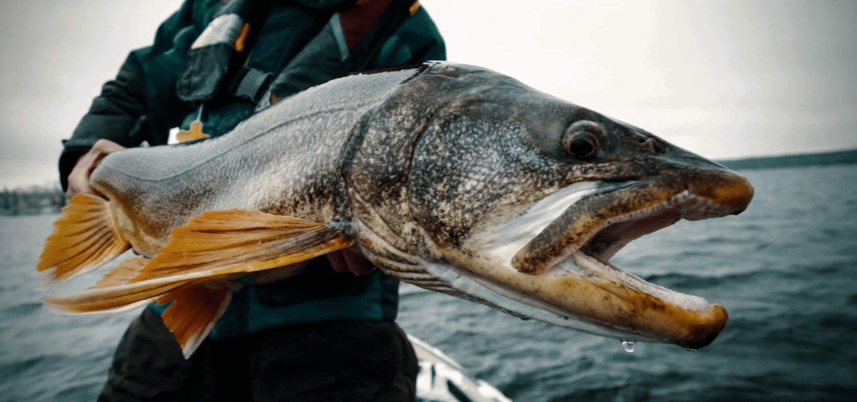 Incredible Late Fall Lake Trout Fishing – Kenanow Lodge, Manitoba