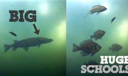 This Spot is LOADED with Fish…. (Underwater Footage)
