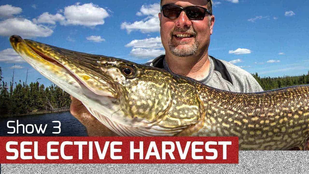 Selective Harvest – AnglingBuzz TV