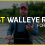Best Walleye Rod for $100