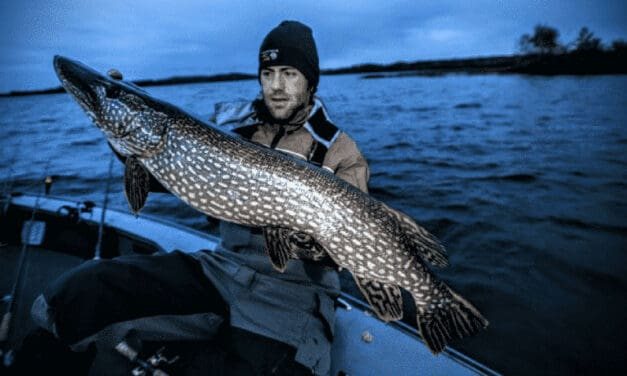 Cornering Late-Fall Trophy Pike