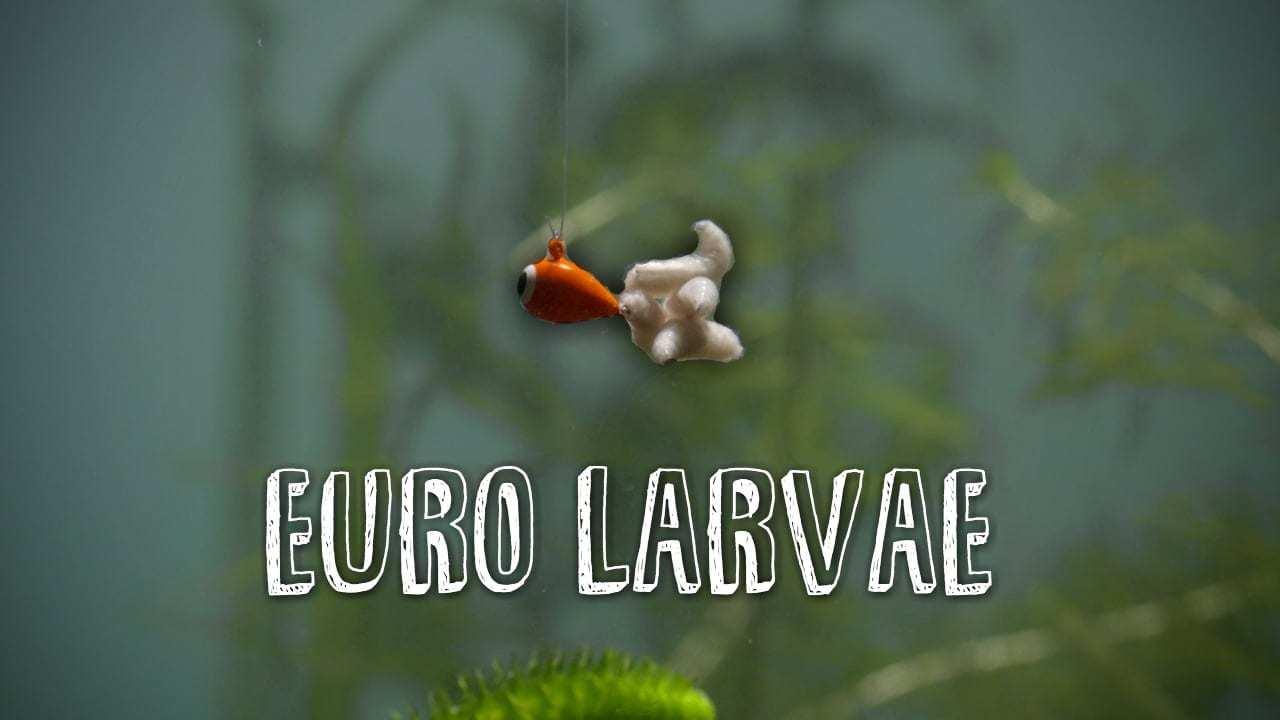Dave Genz: Euro Larvae for Panfish