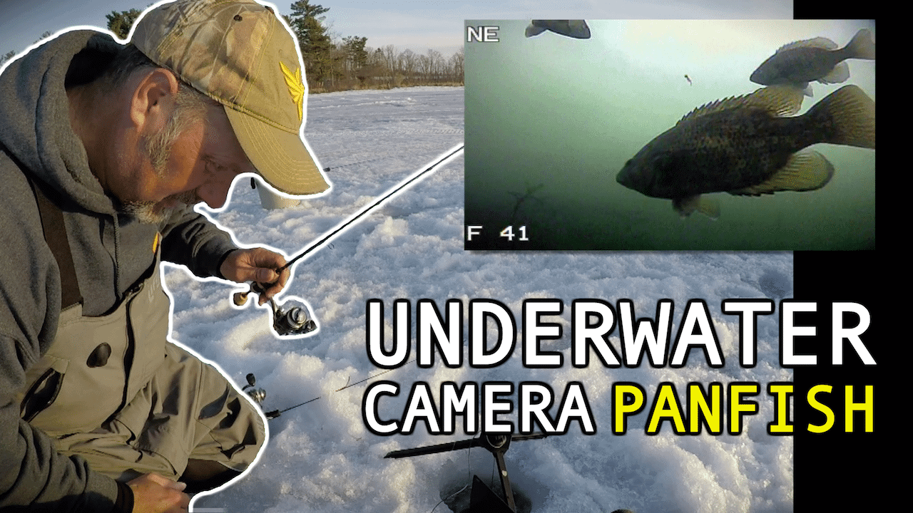 Ice Fishing Panfish with Wax Worms