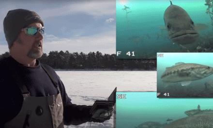 Ice Fishing Largemouth Bass