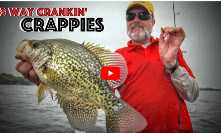 Three-Way Rigging Tiny Crankbaits for Fall Crappies