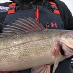 Michigan Fishing Report for Walleye, Panfish and Lake Trout