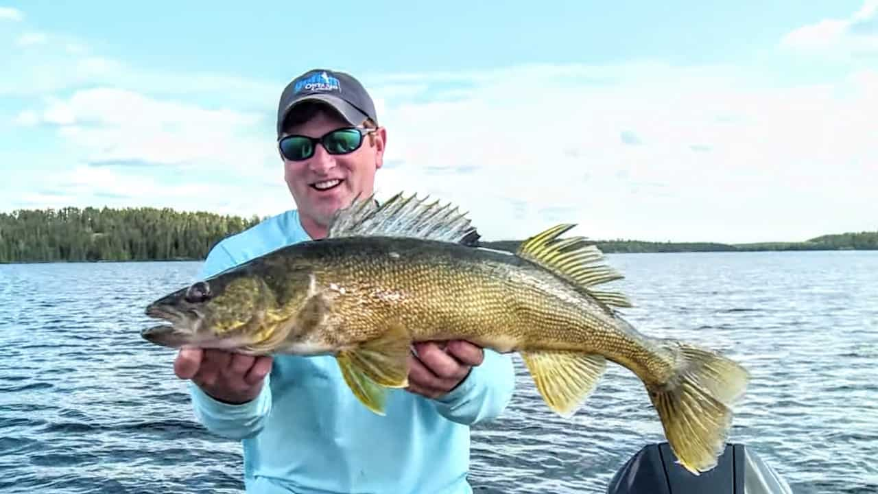Walleye Search Baits and Gear for Summer Fishing AnglingBuzz