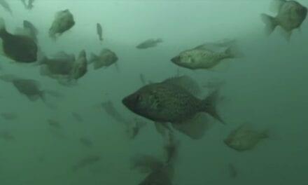 Lake Vermilion Panfish Report – 2 Tactics for Success