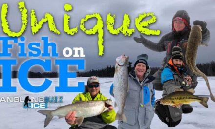Unique Fish on Ice
