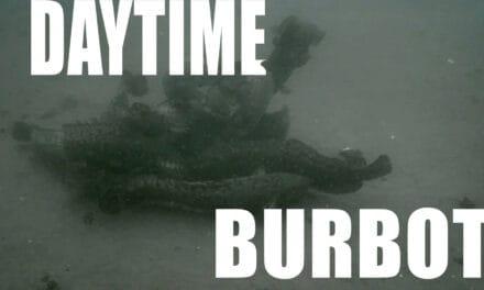 Daytime Burbot