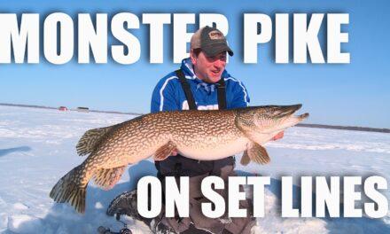 Monster Northern Pike on Setlines
