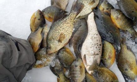Ottertail County Buzz Bite Report 3-2-2021