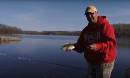 Sight Fishing for Spring Crappies
