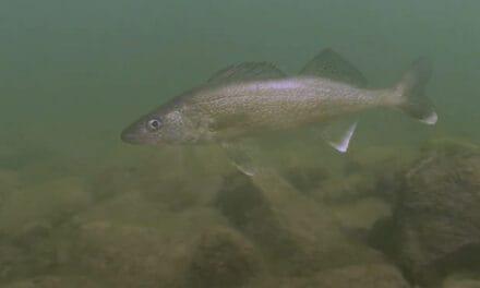 Leech Lake Buzz Bite Report 5-27-2021