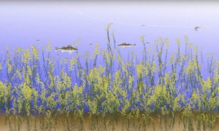 Weed Walleyes